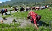Bhutan farmers 2